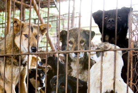 Cães e Gatos são Comida na China - AntonioBorba.com
