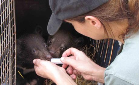 Ursos filhotes sendo resgatados pelo Animals Asia - AntonioBorba.com