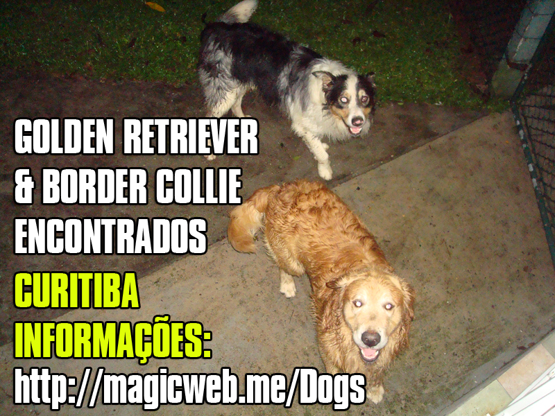 Golden Retriever & Border Collie - Encontrados!