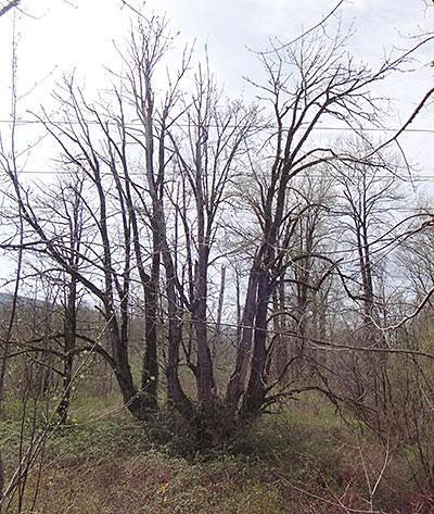 Árvore Peculiar encontrada no Snoqualmie Trail - AntonioBorba.com