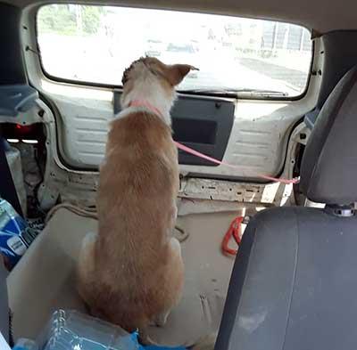 Evander - O Dog de uma Orelha - História de um Resgate